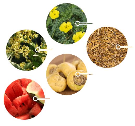 ED-Elixir-ingredients